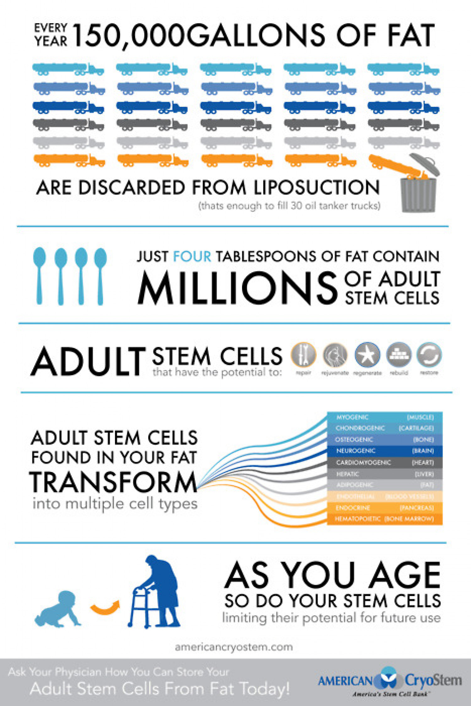 FAT to Adult Stem Cells Infographic