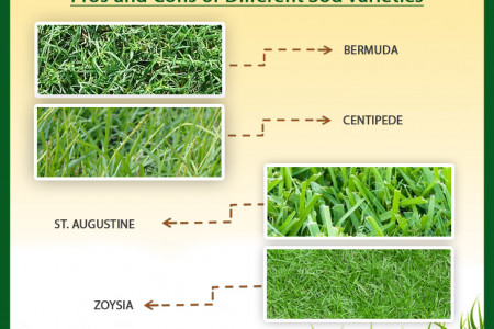 Feel Green Sod Under Your Feet Infographic