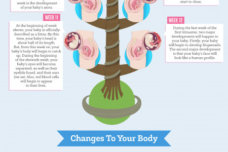 First Trimester of Pregnancy Infographic