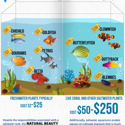 FISH TANKS Saltwater VS Freshwater | Visual.ly