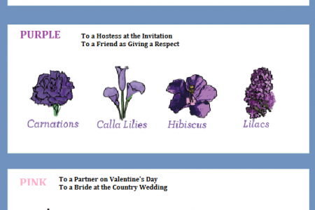 Flowers with their Meaning Infographic