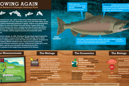 Flowing Again: Salmon Returns to Olympic National Park Infographic