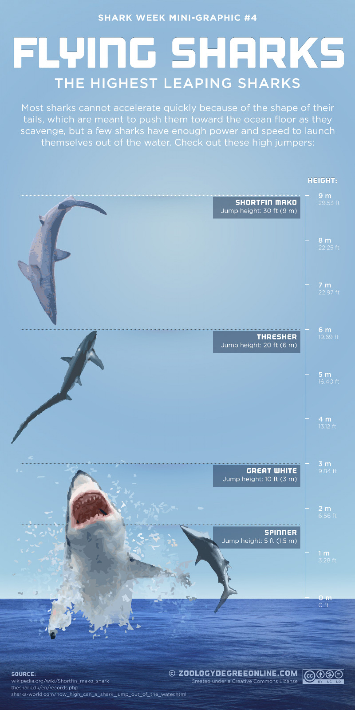 Flying Sharks - The Highest Leaping Sharks Infographic