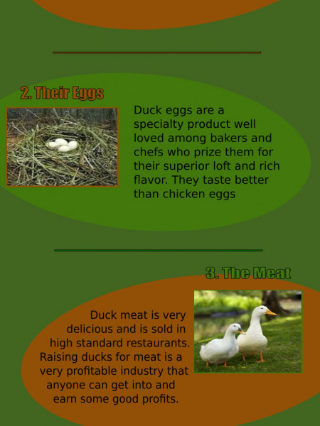Four Reasons Why You Should Raise Ducks Infographic