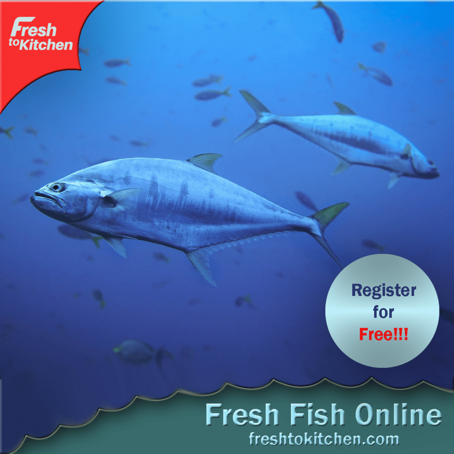 Fresh To Kitchen: Order Fresh Fish Online Kochi, Kerala Infographic