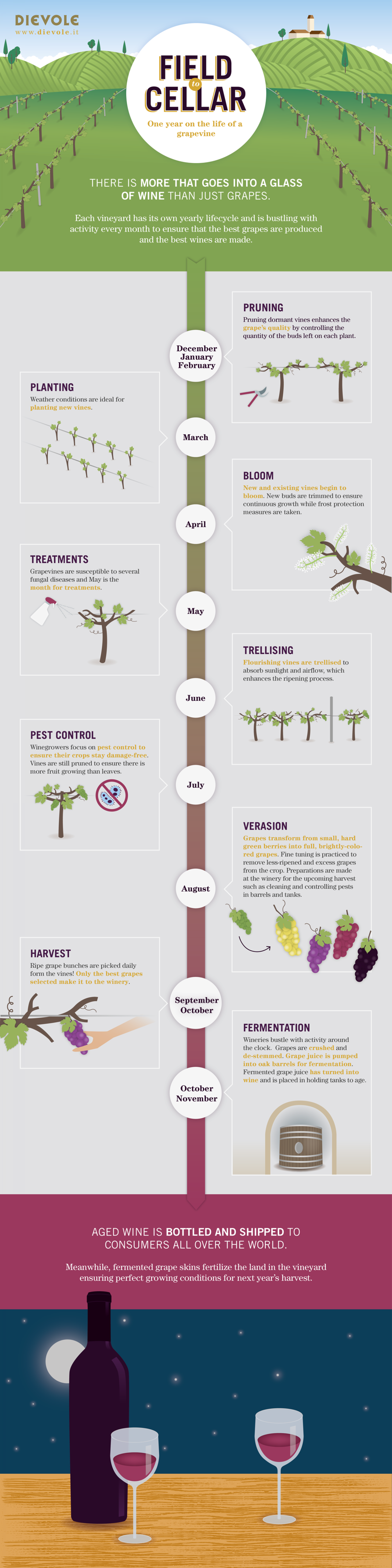 From field to cellar Infographic