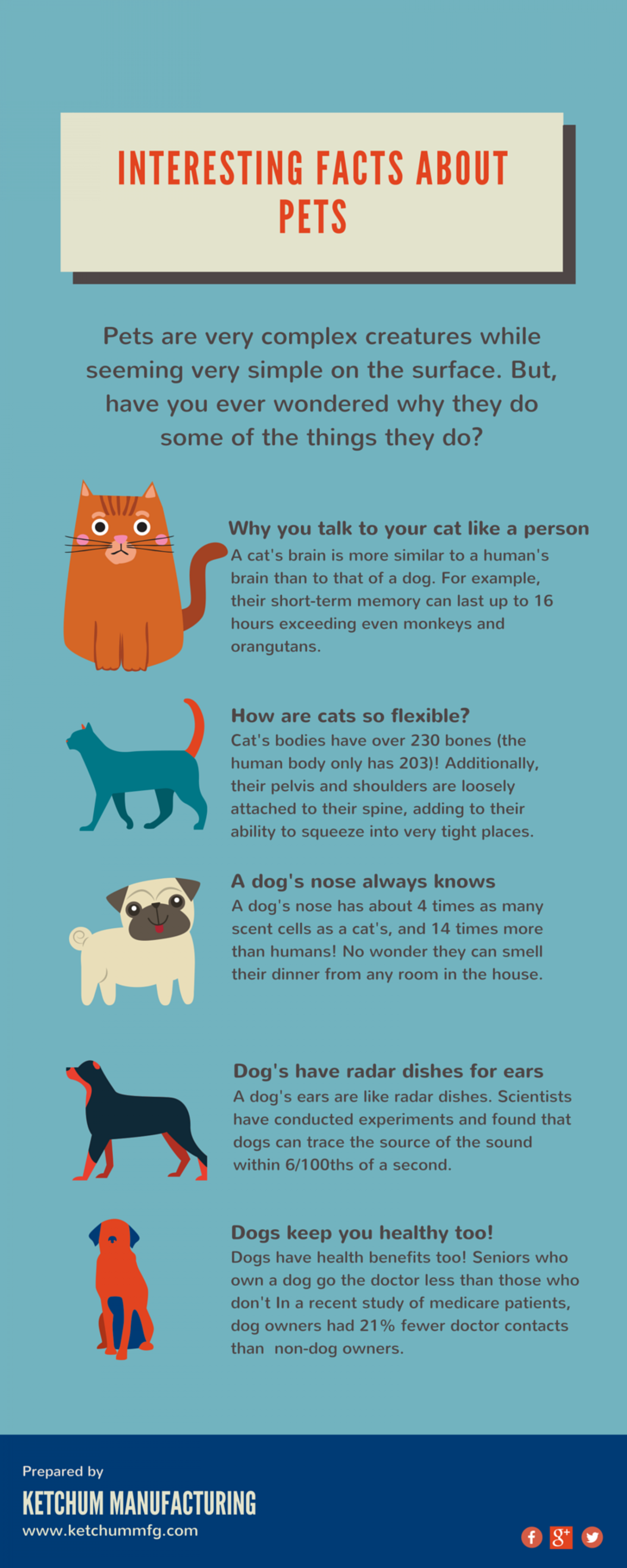 Fun Facts About Pets Infographic