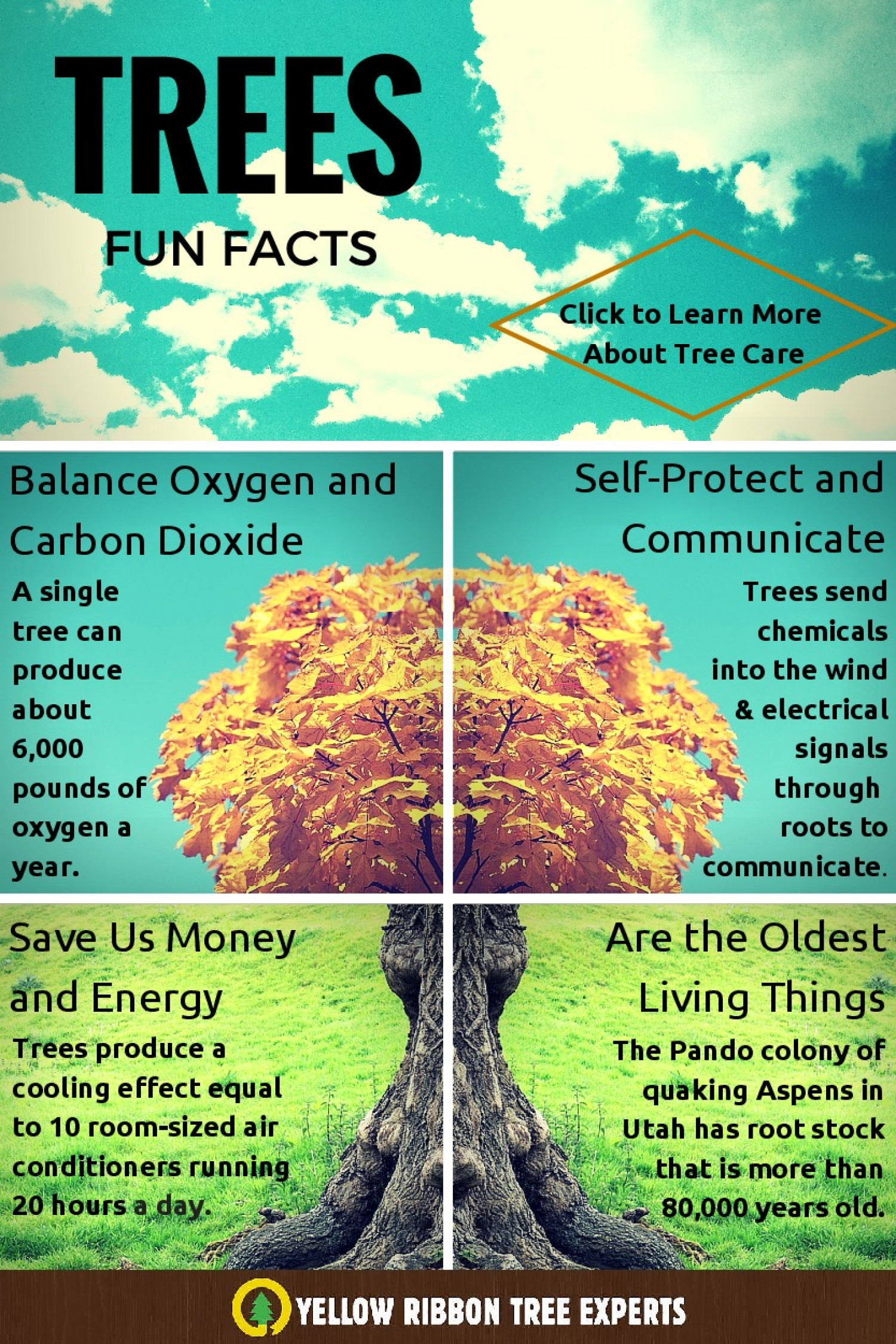 Fun Facts About Trees Infographic