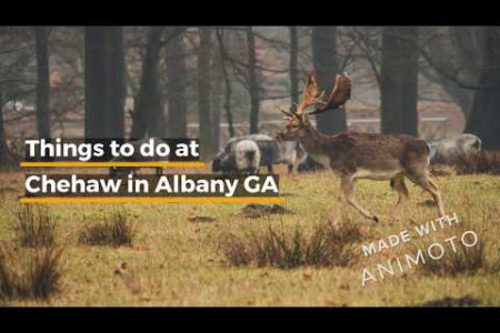 Fun things at Chehaw in Albany GA Infographic