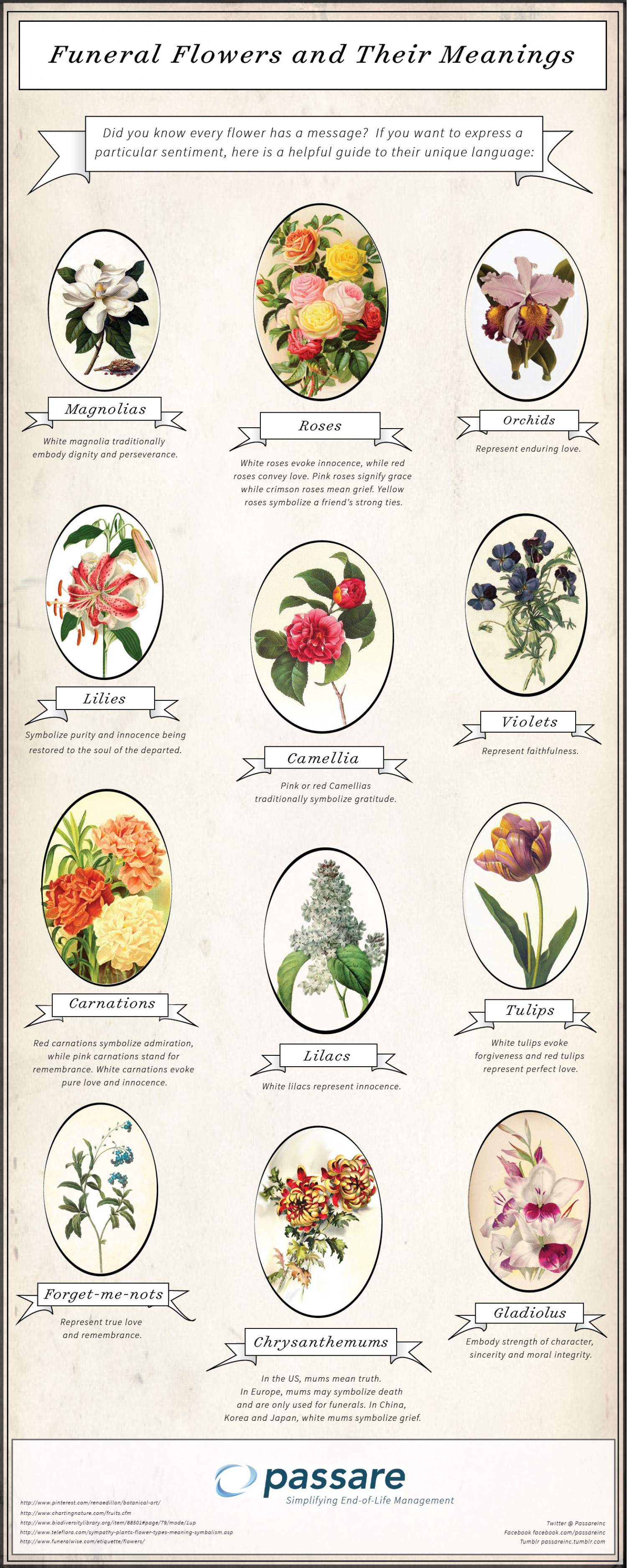 Funeral Flowers And Their Meanings Visual