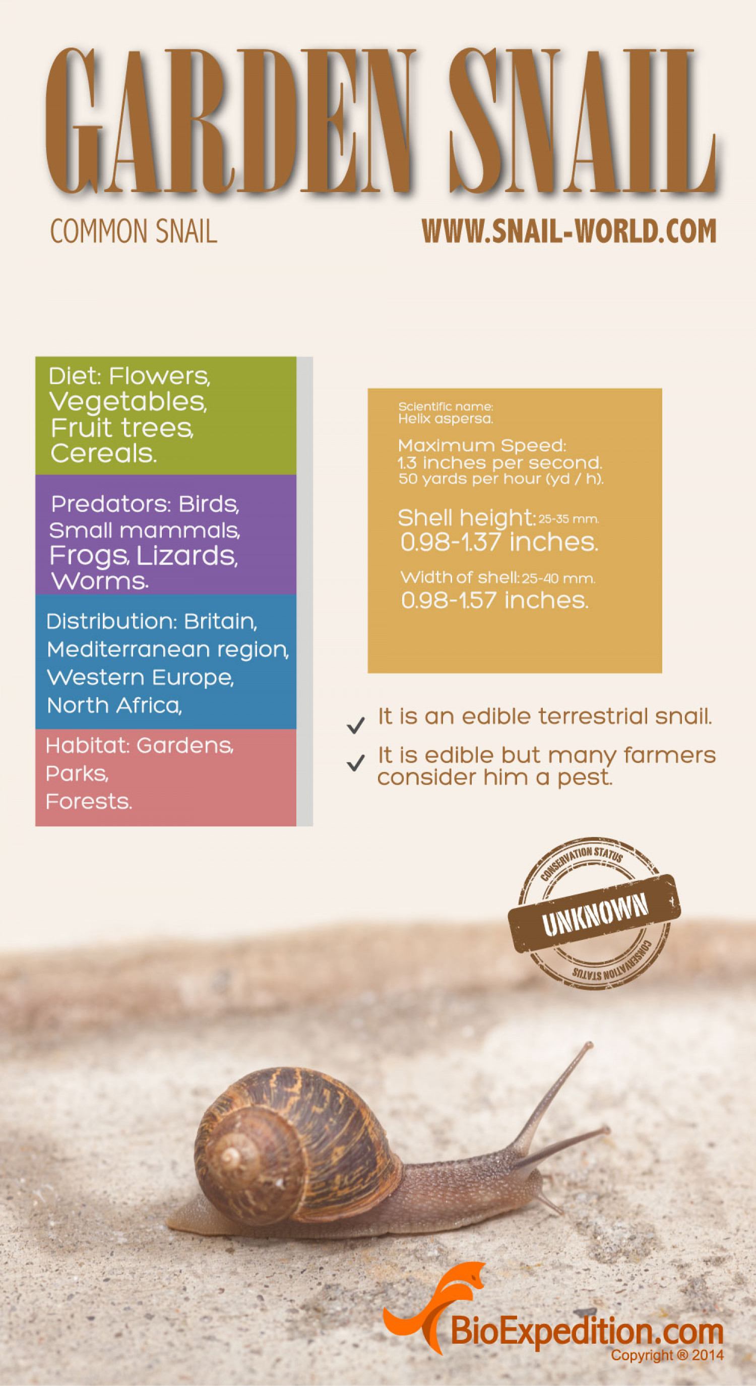 Garden snail infographic embed this visual