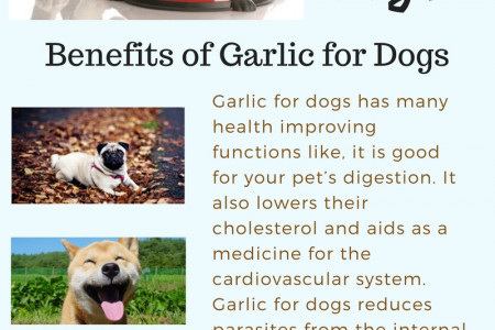 Garlic for dogs Infographic