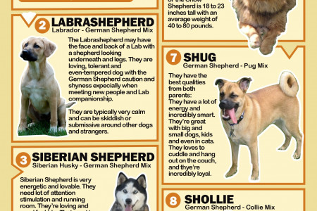 German Sheperd Mixes  Infographic