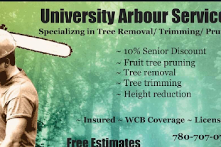 Get the best Tree Trimming in Balwin Infographic