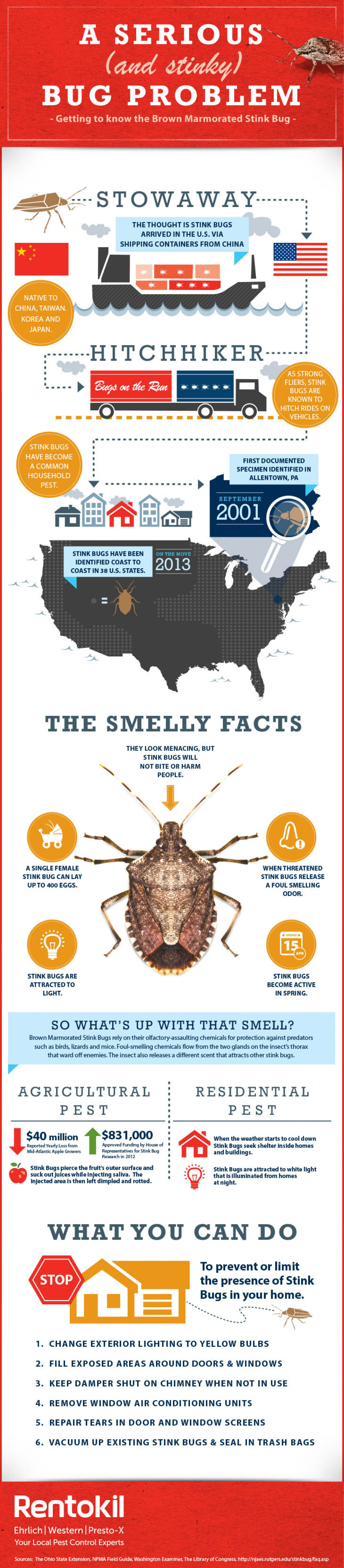 Getting to Know the Brown Marmorated Stink Bug Infographic