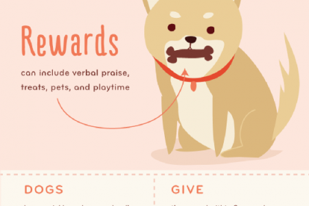 Good Dog: Tips for House Training Your Pet Infographic
