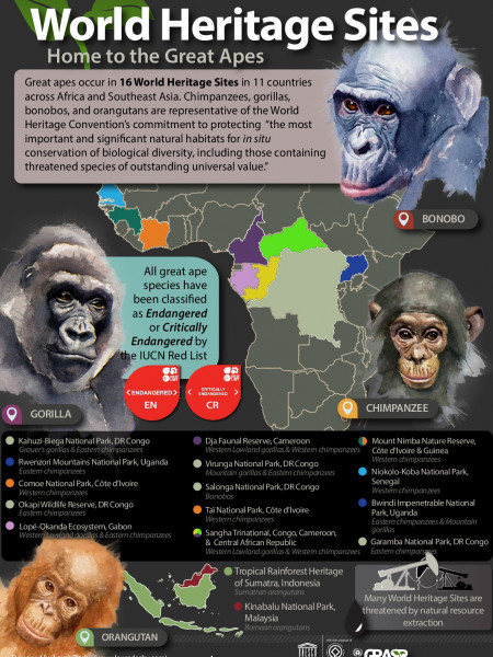 Great Apes in UNESCO World Heritage Sites  Infographic