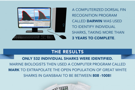 Great Danger for the Great White Shark Infographic