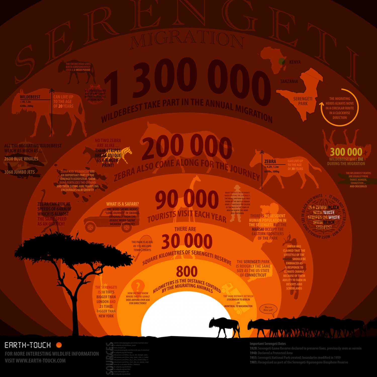 Great Migration: Serengeti  Infographic