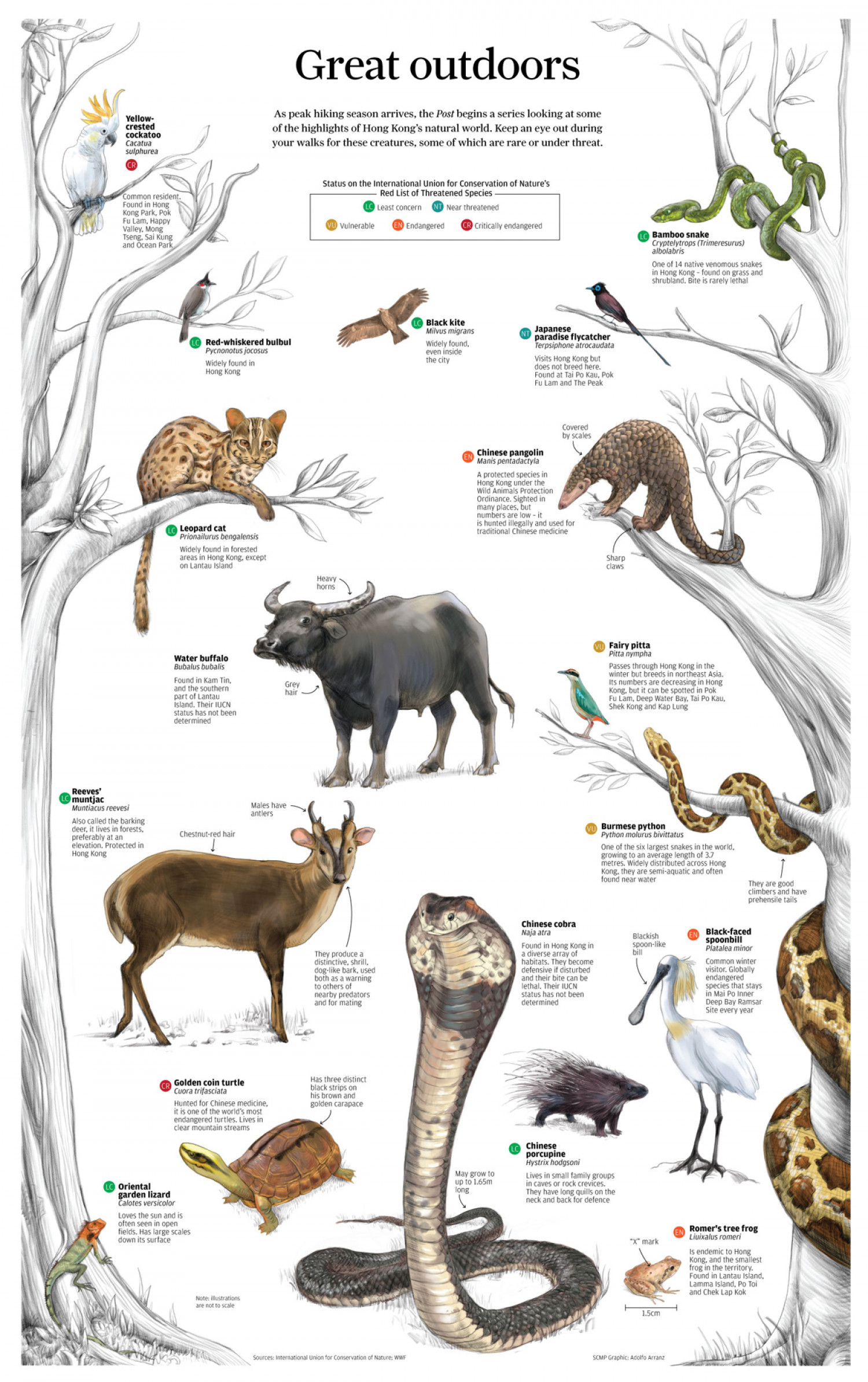Great Outdoors Infographic