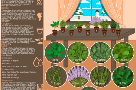 Growing Herbs in the Winter Months Infographic