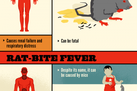 Health Risks of Having a Mouse in Your House Infographic