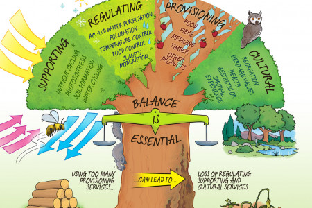 Healthy ecosystems service humans Infographic
