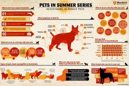 Heatstroke In Family Pets Infographic