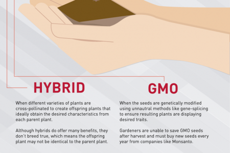Heirloom Seeds Benefits Infographic Infographic