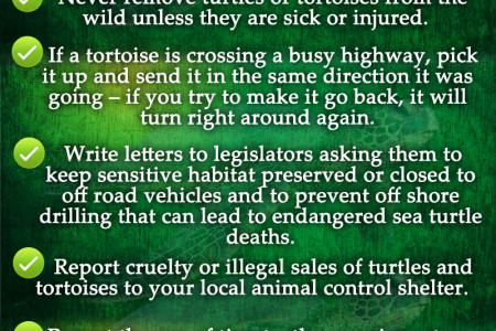 Help Save Turtles And Tortoises For Future Generations Infographic