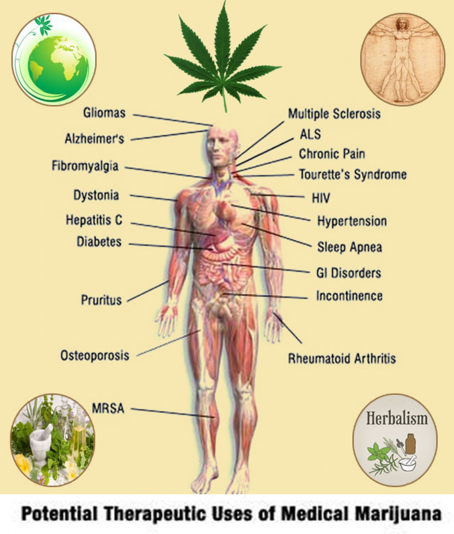herbal benefits of medical marijuana ly herbal benefits of medical marijuana infographic
