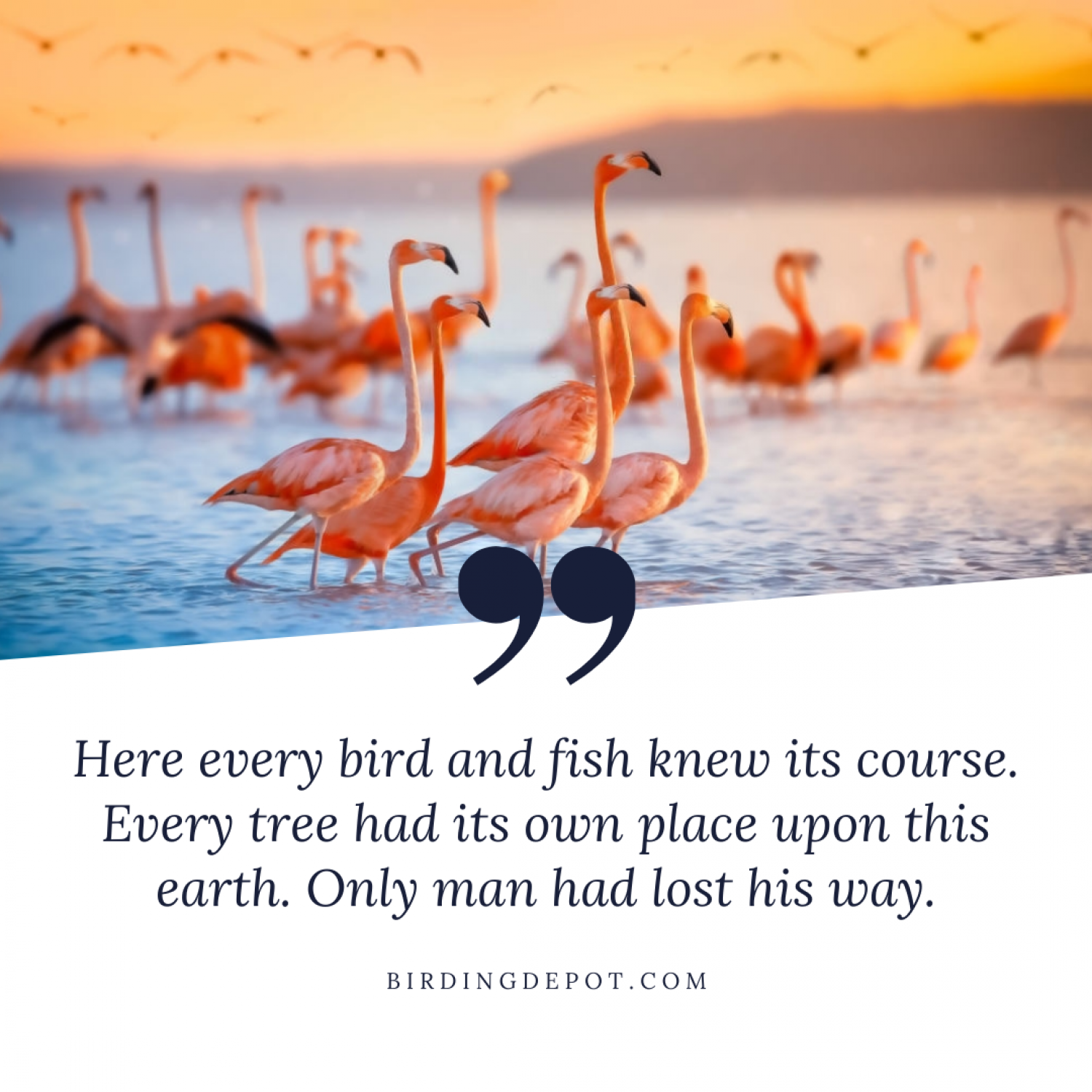 Here every bird and fish knew its course. Infographic