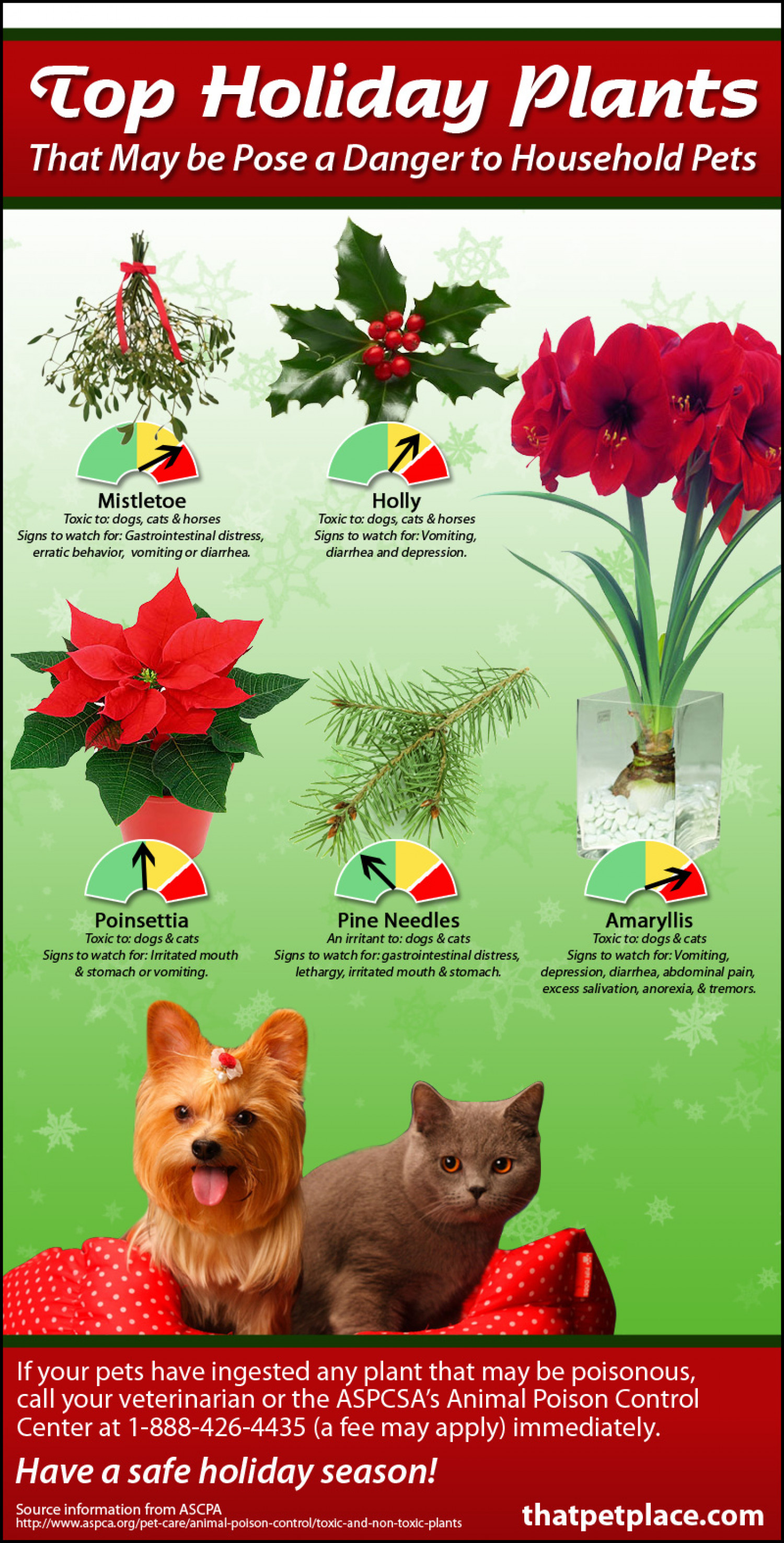 Holiday Plants that are Toxic to your Pets Infographic