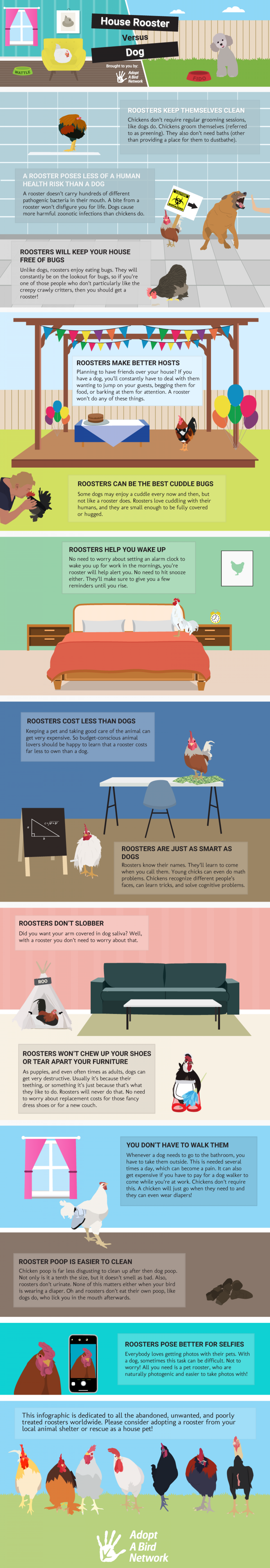House Rooster versus a Dog Infographic