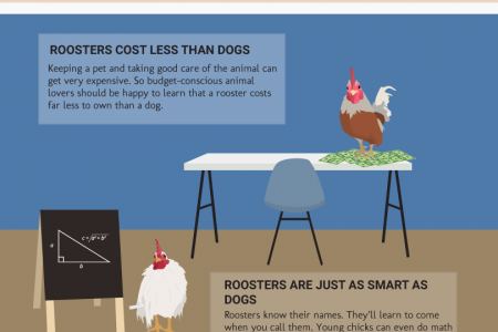 House Rooster Versus Dog Infographic