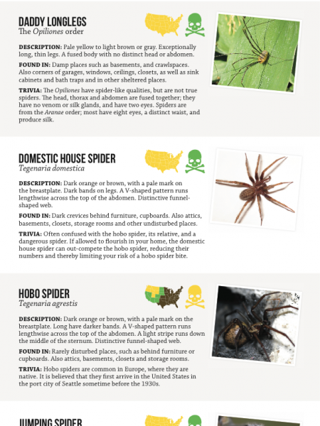 House Spider Identification Chart Infographic
