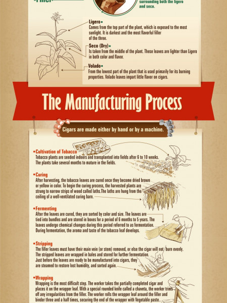 How A Cigar Is Made Infographic