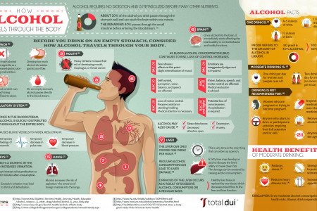 How Alcohol Travels Through the Body Infographic