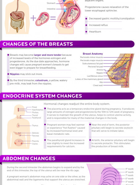 pregnant woman Infographics | Visual.ly