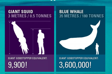 HOW BIG IS GIANT SQUID Infographic