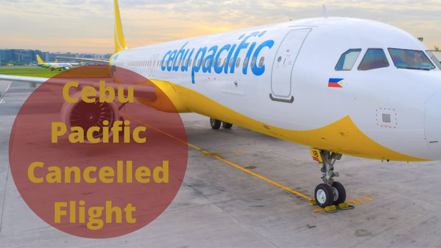 How! Cebu Pacific Cancelled Flight?  Infographic