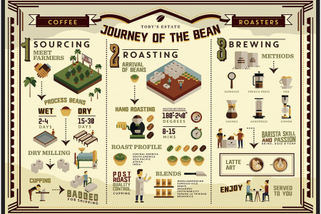 How Coffee Changes from a Bean to Drink Infographic