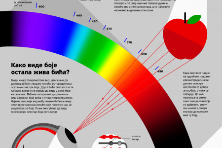 How Do We See Colours? Infographic