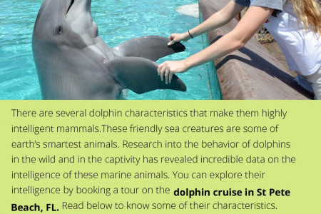 How Intelligent are Dolphins? Infographic