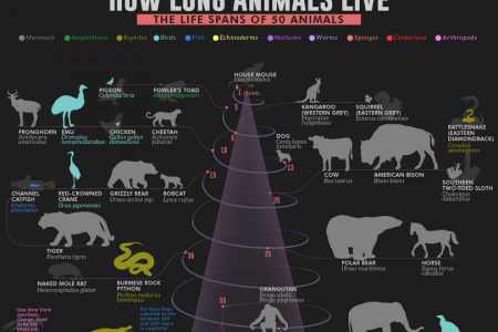 How Long Animals Live: The Life Spans of 50 Animals Infographic