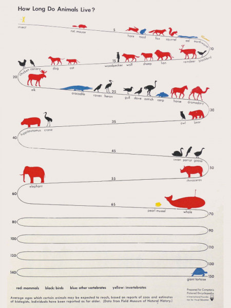How Long Do Animals Live? Infographic