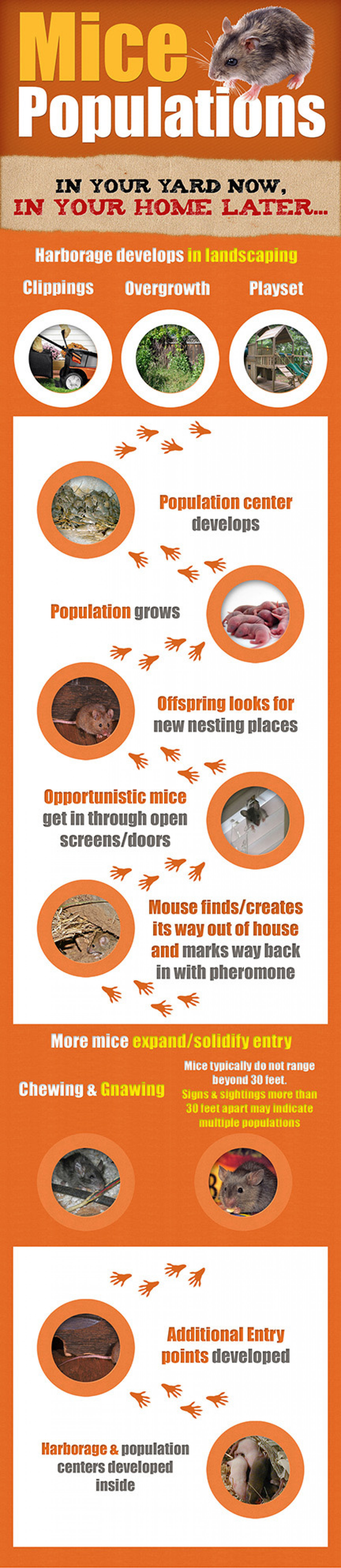 How Mice From Your Shed Move To Your Home Infographic