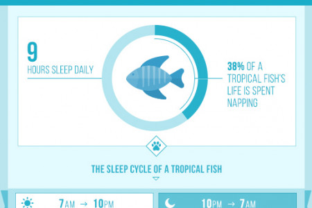 How Much Do Our Pets Really Sleep? Infographic