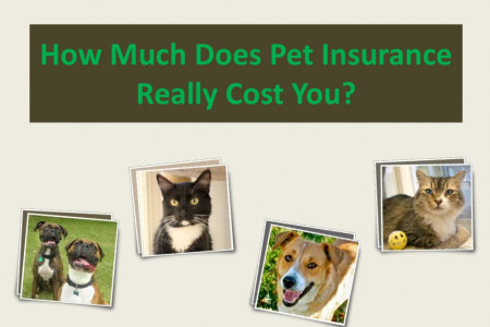 How Much Does Pet Insurance Really Cost You? Infographic