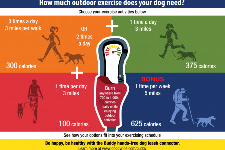 How Much Outdoor Exercise Does Your Dog Need? Infographic